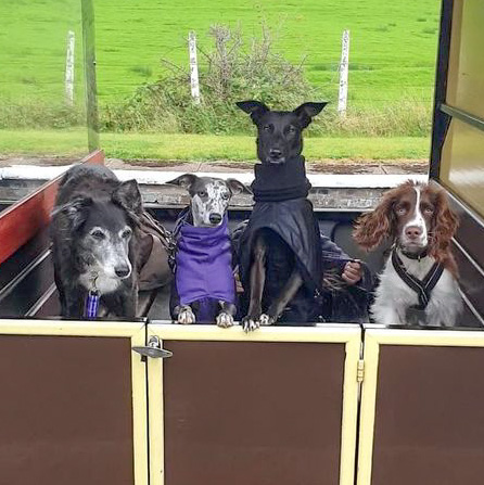 Happy dogs having a day out on our line
