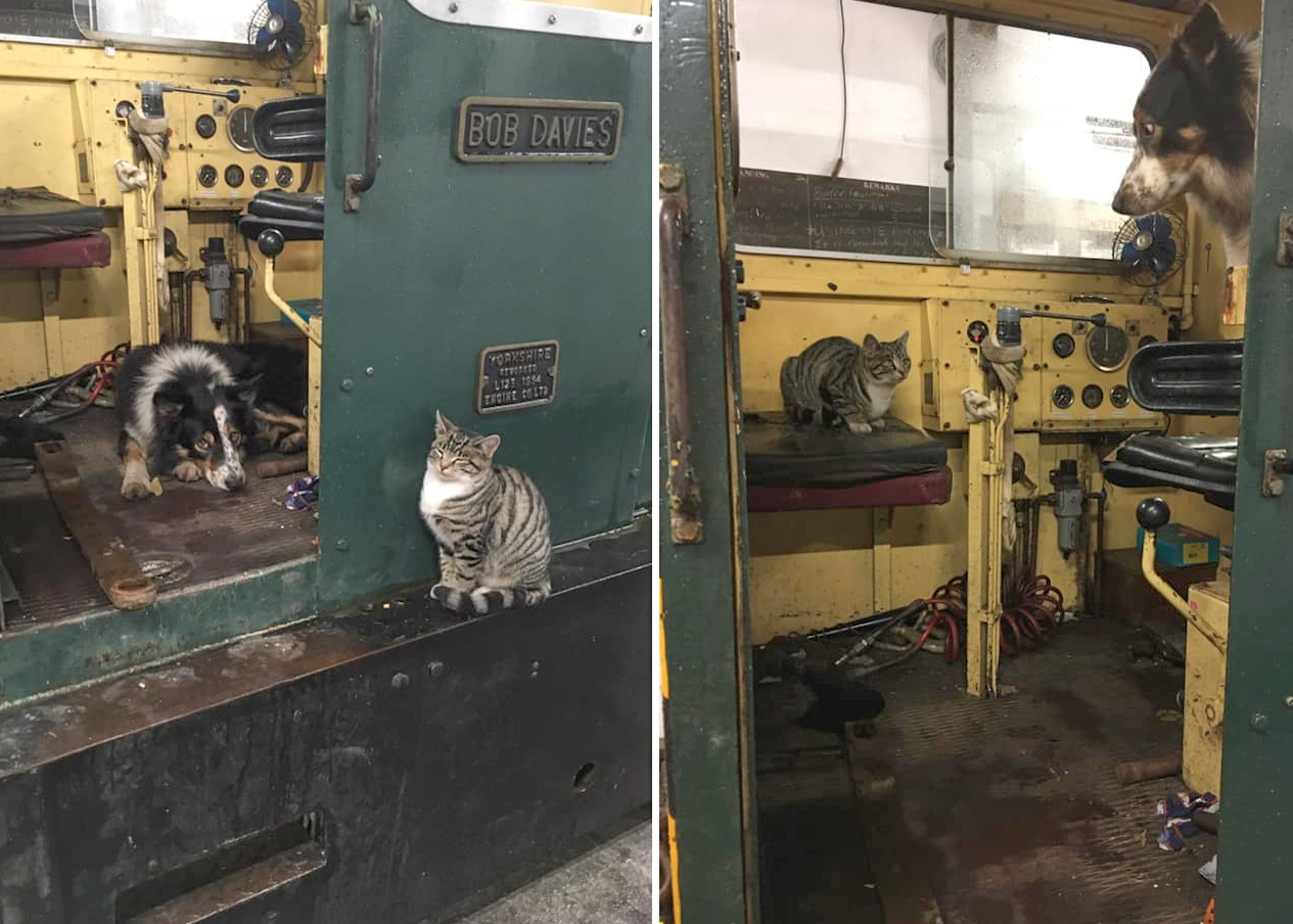 Dog Max with our resident cat Marian, both vying for the best seat in the cab of our diesel Trigger