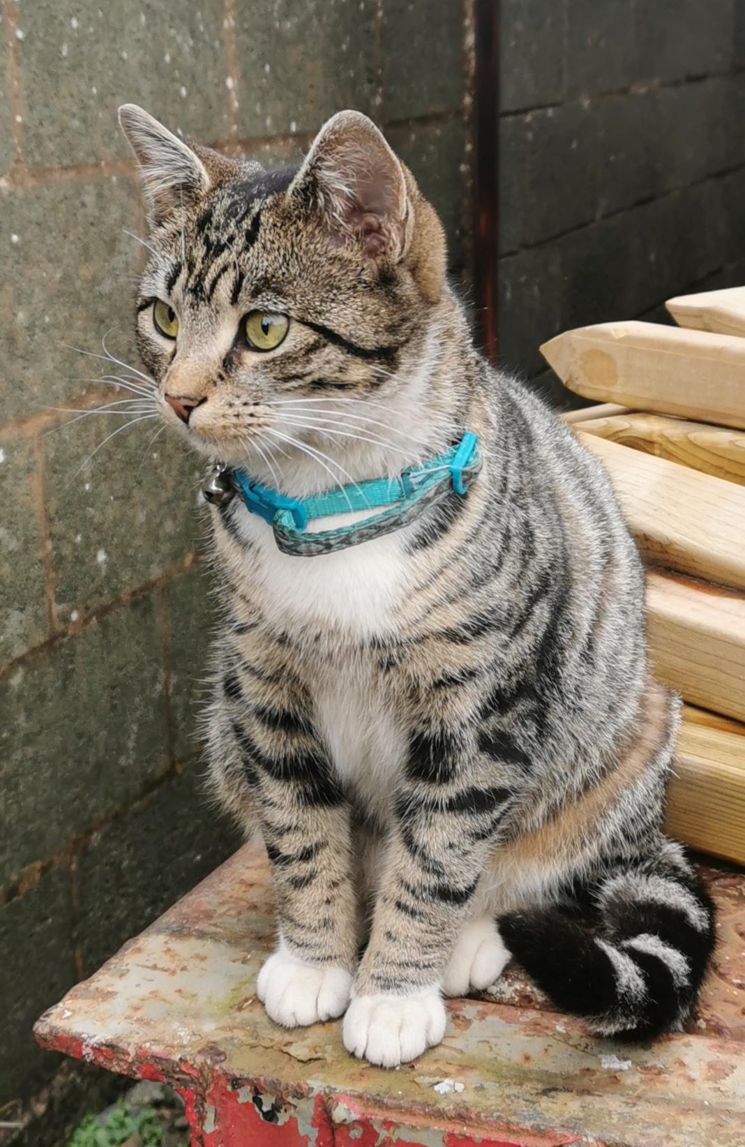 Marian the Llaunuwchllyn station cat
