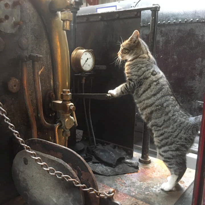 Marian the cat on Maid Marian's footplate