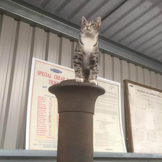 Marian the cat on a locomotive chimney